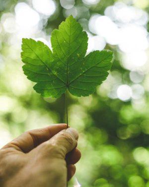 environmental-responsibilites
